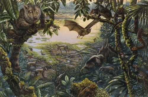 Eoceno | Colecionadores de Ossos